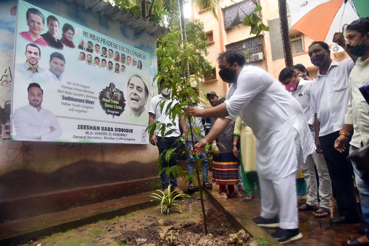 MLA Zeeshan Siddique Plant Trees Save Live Program on Former Prime Minsiter Rajiv Gandhi Birth Anniversary as Sadbhavana Divas .